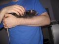 Rats 5 020